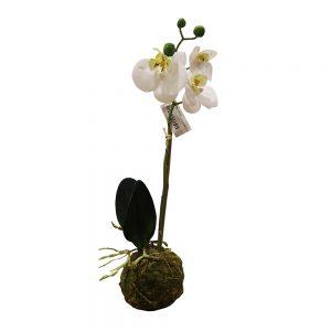 Pé de Orquídea | Homeart - Design e Decoração de Interiores | 18000364