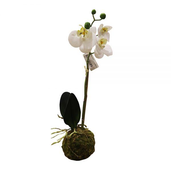 Pé de Orquídea