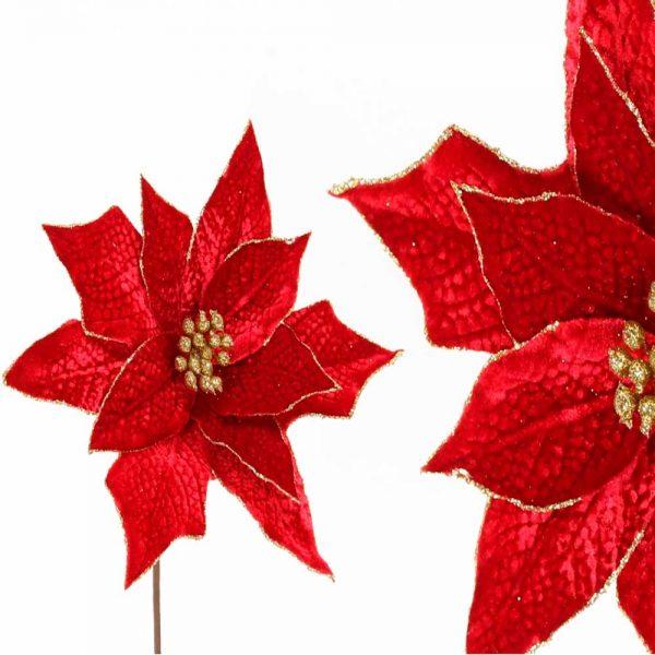 Flor Natal Vermelha
